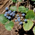 Sedona Herbal Medicine