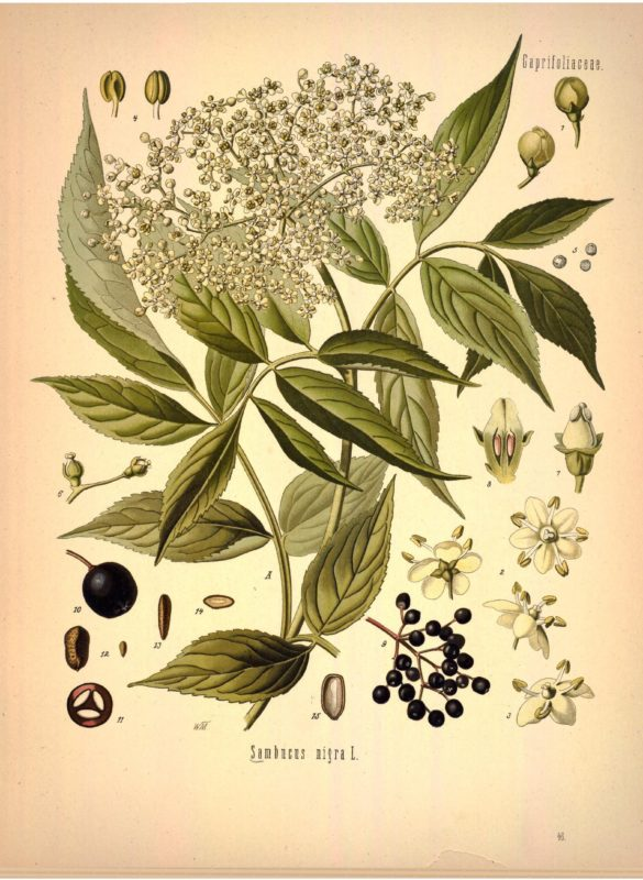 """Arizona Herbal medicine"" ""Sedona herbal medicine"" ""Phoenix herbal medicine"" ""Colorado herbal medicine"" ""Las Vegas herbal medicine"" ""Prescott herbal medicine"" ""Flagstaff herbal medicine"" ""Oak Creek Canyon"" ""New Mexico herbal medicine"""